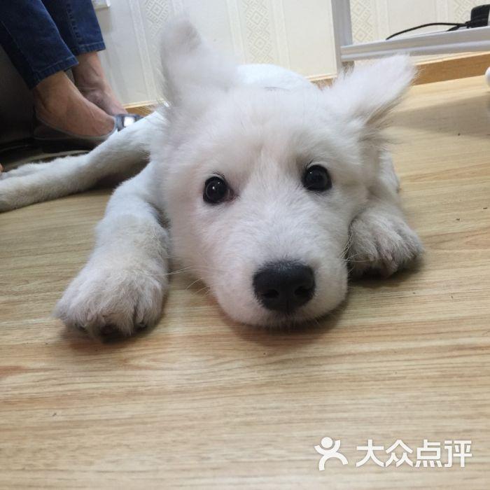 壁纸 动物 狗 狗狗 700_700