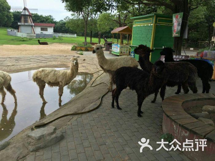 南通动物园图片 - 第3张