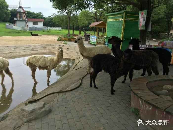 南通动物园图片