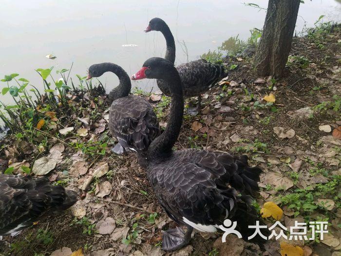 东莞寮步香市动物园图片 - 第1张