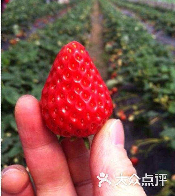 青浦赵屯草莓