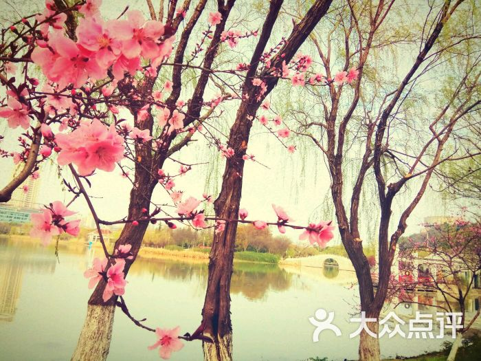 月湖风景区-图片-武汉周边游-大众点评网