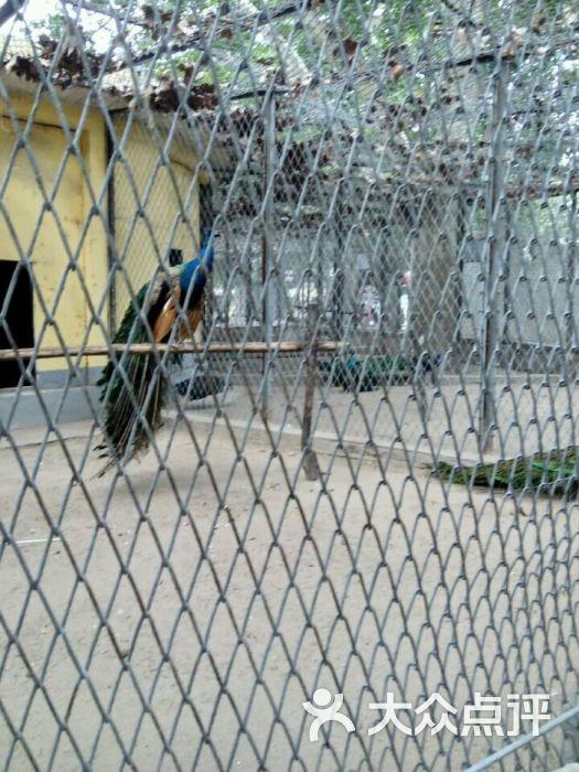 渭滨公园动物园图片 - 第10张