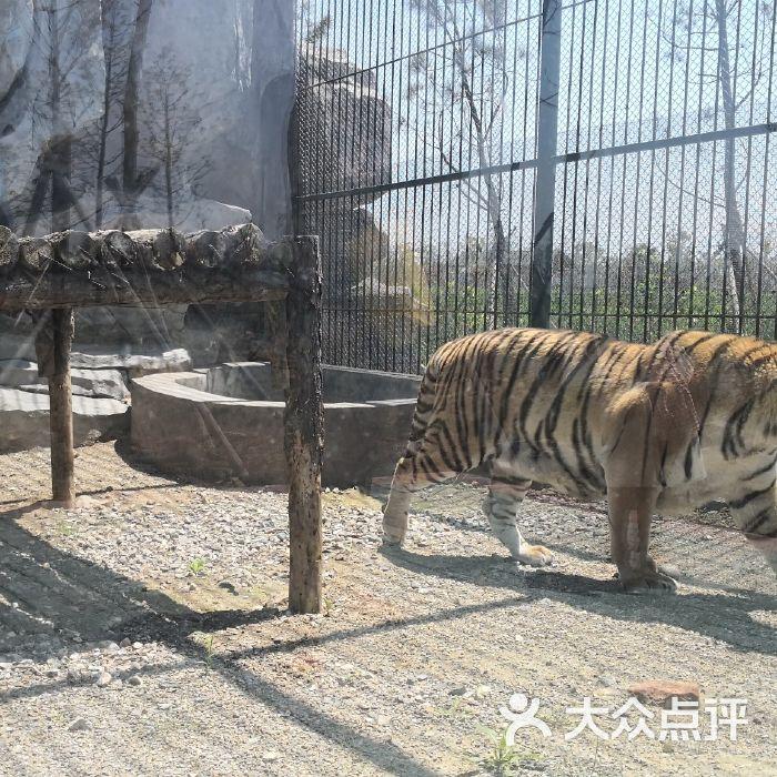 台州湾野生动物园