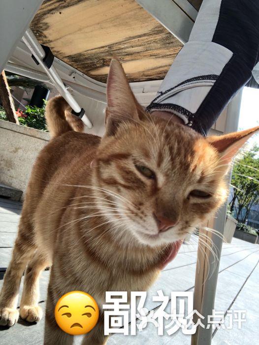 睡不着的一只懒猫上传的图片