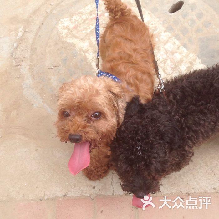 369宠物网_王某某寄养宠物店-图片-天津宠物-大众点评网