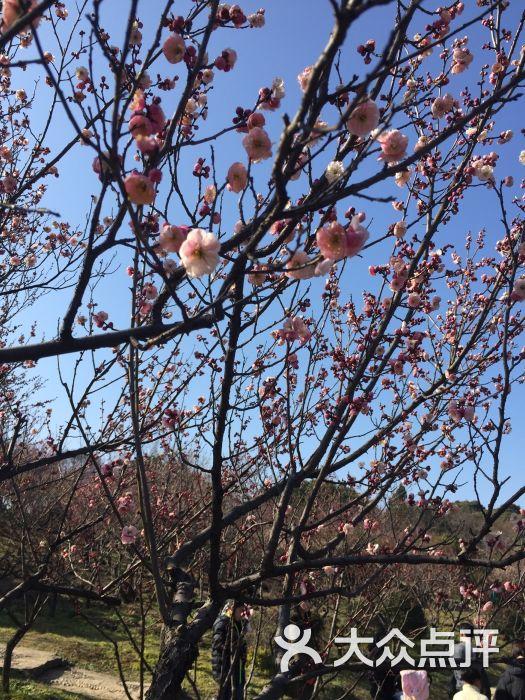 梅園橫山風景區圖片 - 第6張
