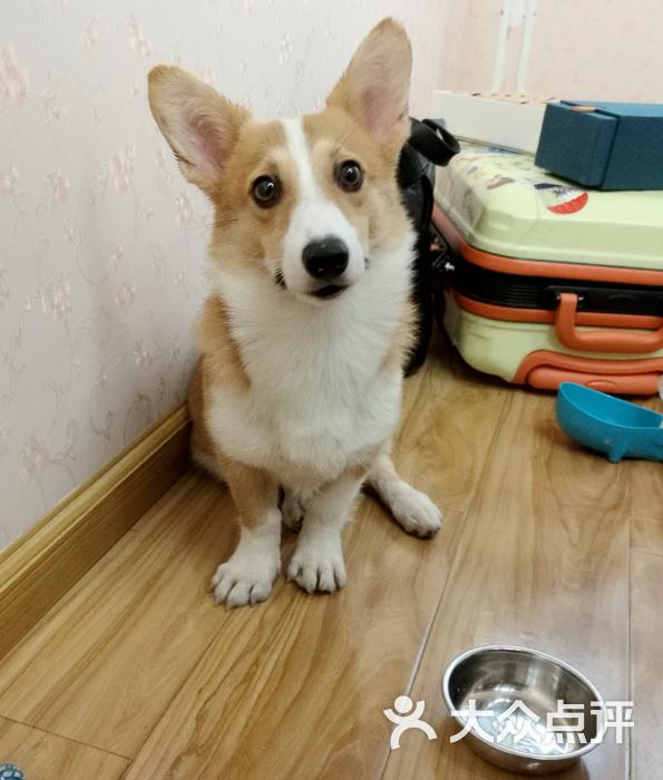 369宠物网_初心宠物沙龙-图片-杭州宠物-大众点评网