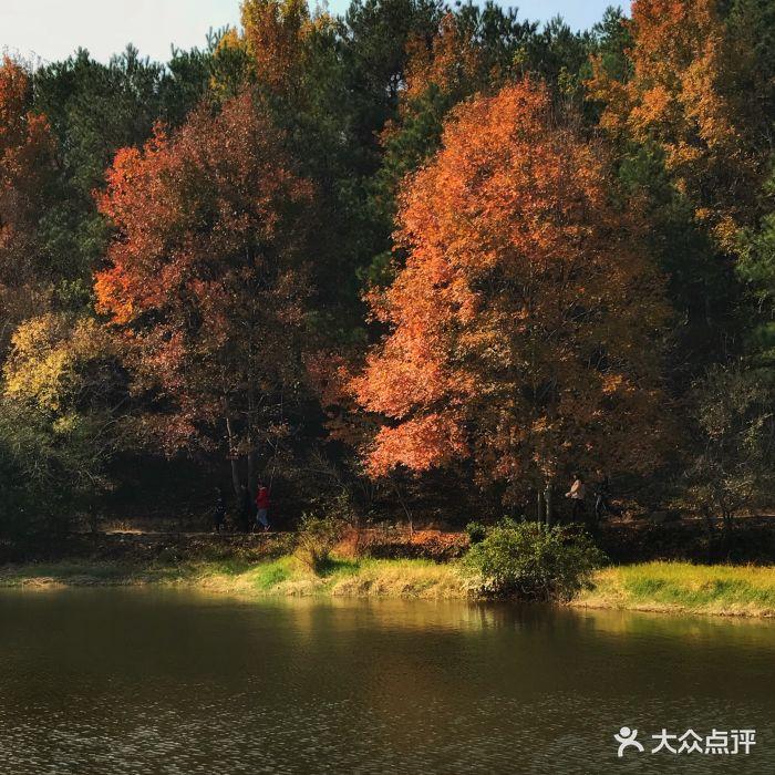 黃陂木蘭勝天農莊風景區圖片 - 第387張
