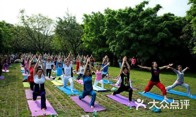 集體戶外瑜伽活動圖片