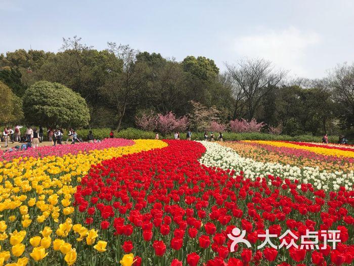 梅園橫山風景區圖片 - 第4張