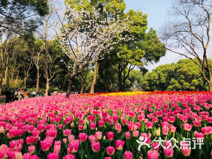 梅園橫山風景區圖片 - 第204張