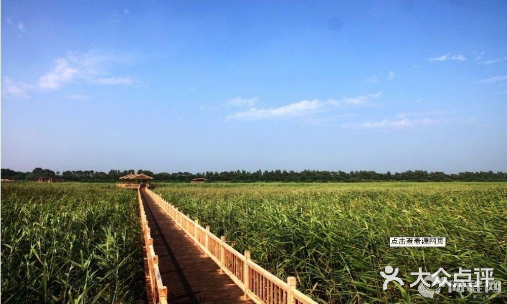 盤錦鼎翔葦海蟹灘風景區圖片-北京自然風光-大眾點評網