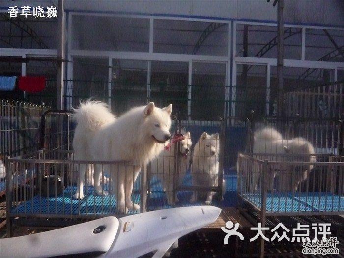 369宠物网_通州梨园狗市-P1170525图片-北京宠物-大众点评网