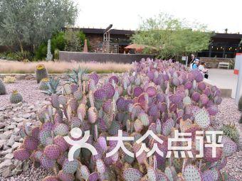 沙漠植物園