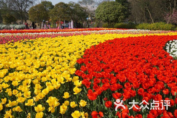 梅園橫山風景區圖片 - 第5張