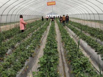 八加八生態草莓園