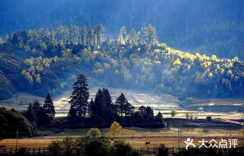 魯朗風景區魯朗林海圖片 - 第1張