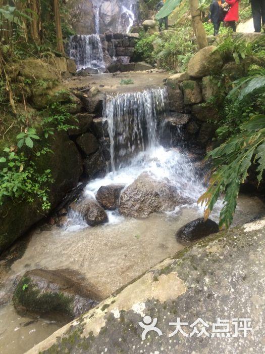 櫻花谷森林溫泉風景區的點評