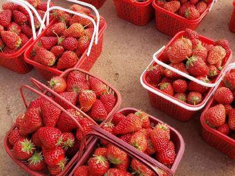 憶甜草莓園