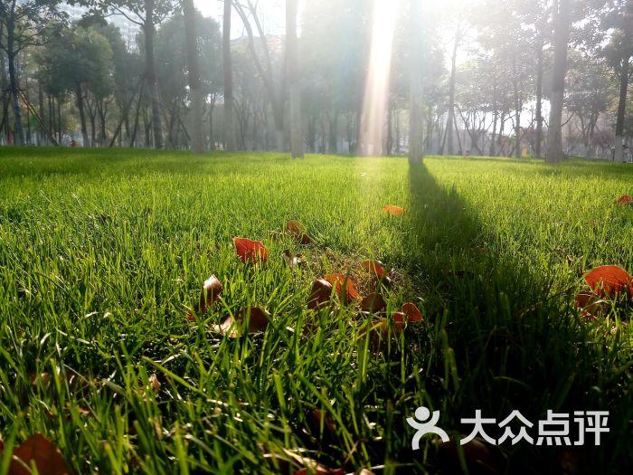 壁紙 成片種植 風景 植物 種植基地 桌面 700_525