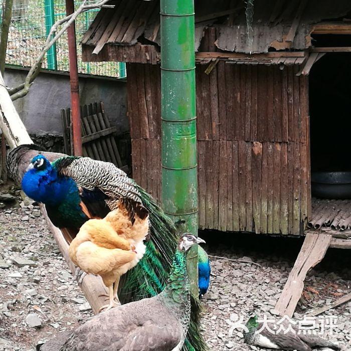 藏龍百瀑風景區圖片-北京自然風光-大眾點評網