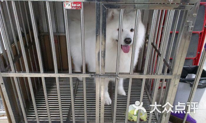369宠物网_百万宝贝宠物生活馆图片-北京宠物店-大众点评网
