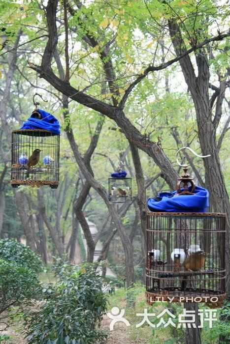 青岛整形美容_辛家庄北山公园-遛鸟人的世界图片-青岛周边游-大众点评网